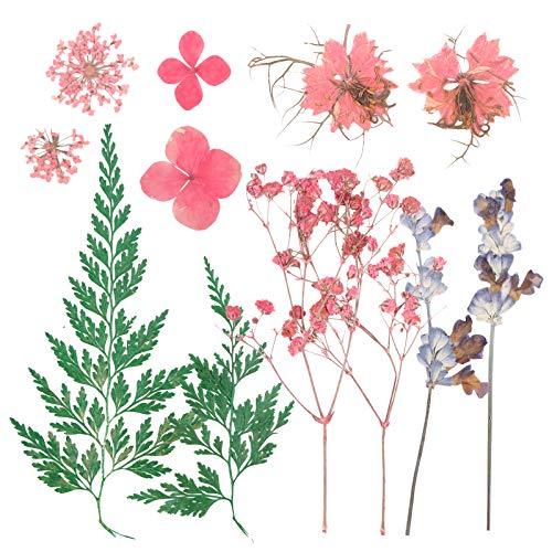 Flores Secas Manualidades Pequeñas flores secas  Marca VINFUTUR