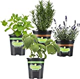 Bonnie Plants Cocktail Herb Plant Garden Live Herb Plants - 4 Pack, Basil, Mint, Lavender & Rosemary, Drink Garnish Plants