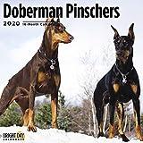 Doberman Pinschers Calendar 2020 (Dog Breeds)