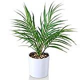 Kazeila Mini Topf gefälschte Pflanzen, 40 cm künstliche Areca Palme für Home Office Hotel Bookstore Cafe Moderne Dekoration