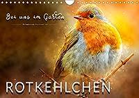 Bei uns im Garten - Rotkehlchen (Wandkalender 2021 DIN A4 quer): Eindrucksvolle Bilder der beliebten Voegel. (Monatskalender, 14 Seiten )