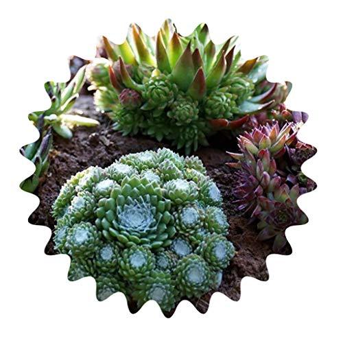 Sukkulenten/Kakteen/Samen Mix/Lithops/Zierpflanzen/ca. 200 Samen