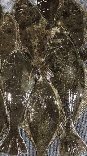北海道 天然 ヒラメ1尾 4-5kg前後サイズ 活締 血抜き済み