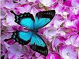 ZUIAIIUYA Pintar por Numeros Adultos Niños DIY Pintura por Números con Pinceles Y Pinturas,Regalos De Decoración del Hogar-Mariposa Azul(16 * 20 Pulgadas, Sin Marco)