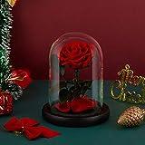 Eterfield Immerwährende Echte Rose Ewige Rose Konservierte Blume in Glas Valentinstag Geburtstag Muttertag Thanksgiving Weihnacht Hochzeitstag Geschenke (Rote)