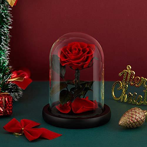Eterfield Rosa real eterna en cristal, para San Valentín, cumpleaños, Día de la Madre, Día de Acción de Gracias, Navidad, aniversario de boda, regalo (rojo)