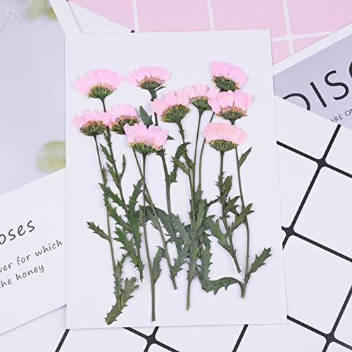 10pcs/bag Crystal chrysanthemum Dried flower embossing pressed flower drip phone case applique painting flower material (Color : 1)