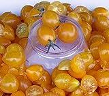 Blondkopfchen Organic Tomato Seeds - aka Little Blonde Girl - High Yielding!!!(25 - Seeds)