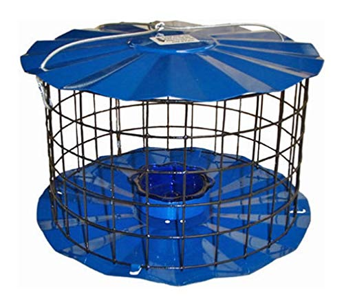 Erva Bluebird Feeder - Includes Meal Worm Cup - Designed to Keep Squirrels Out - Made in The USA