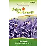 Lavendel Samen mehrjährig