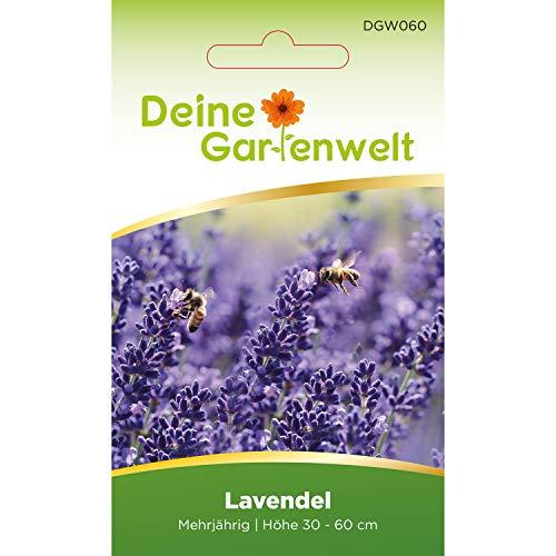 Lavendel Samen mehrjährig | Lavendelsamen | Saatgut für Lavandula angustifolia