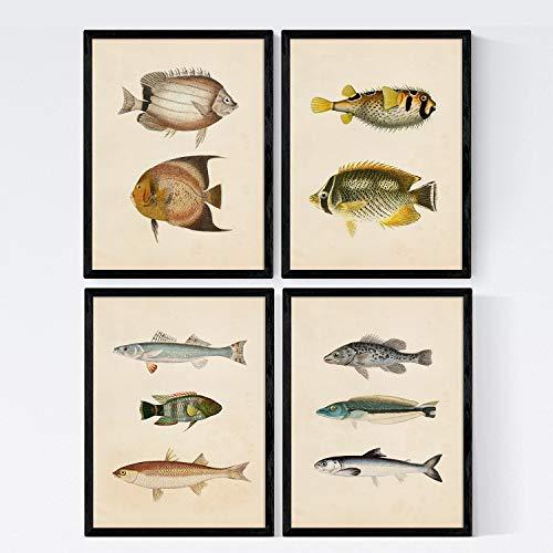 Nacnic Set 4 Fogli di Pesce Effetto Vintage Colorati. Banda. Composizione di 10 Pesci Diversi A4, Sfondo d Epoca Vecchia Carta Poster di Carta 250 gr di Alta qualità.