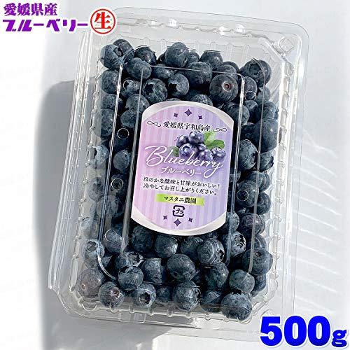 愛媛県 宇和島産 生ブルーベリー サイズ込み 500g 大きさ おまかせ 箱買い 500グラム