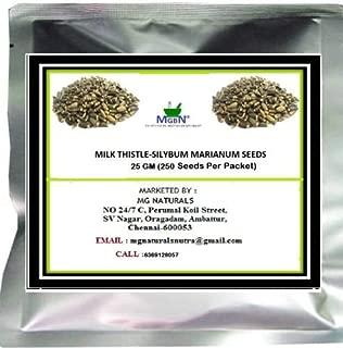 ShopMeeko Seed Thistle-SILYBUM MARIANUM Seeds -25 GM Seed (250 per Packet)