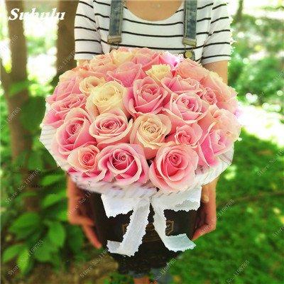 Mixed Seeds Rose, 200 Pcs Rare Bonsai Fleurs Rose, mélanger les couleurs Croissance naturelle Plante en pot pour le jardin Suppies Représentant Amour 13