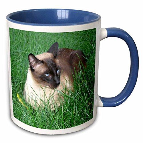 3dRose Mug_4496_6'Siamese Cat - Taza de cerámica, color azul y blanco