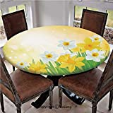 "Elastic Edged Polyester Fitted Table Cover,Daffodils Garden Narcissus Rebirth and New Beginnings Celebration Graphic,Fits up 45""-56"" Diameter Tables,The Ultimate Protection for Your Table,Green Yellow"