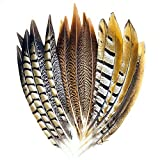 Best Feathers - 18 Pcs 3 Style Natural Pheasant Feathers Review