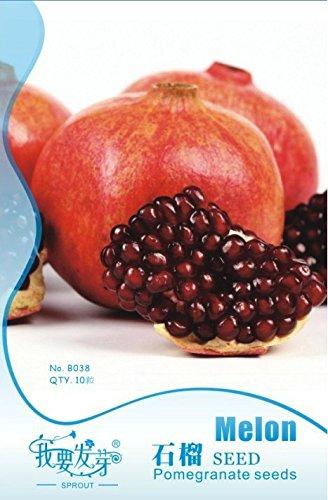 30pcs 1100% Véritable frais Rare Mini Jaune Ficus Carica Fig Fruit Arbre Graines