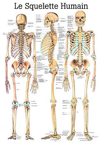ruediger Anatomía pa03Le Squelette humain Pizarra, Francés, 70cm x 100cm, papel