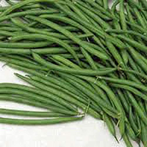 Burpee Stringless Green Bush Bean - 25 Count Seed Pack - Non-GMO - A Culinary Star, pods are Delicious in Many Foods. - Country Creek LLC