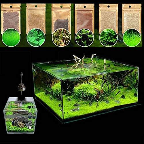 Kimilike Wasser Gras Samen, 600 StüCke Aquatics Wasser Gras Pflanzensamen Aquarium Aquarium Landschaft Dekoration Wasser Gras Samen 600pcs