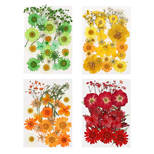 107 Pieces Real Dried Pressed Flowers Natural Dry Flowers Petals kit Colorful Daisies Gypsophila for Resin Art, Floral Decors in Home, Pendant Crafts Making, Scrapbooking and DIY