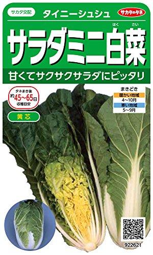 サカタのタネ 実咲野菜2621 サラダミニ白菜 タイニーシュシュ 00922621