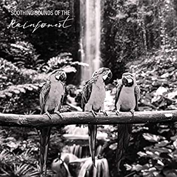Soothing Sounds of the Rainforest – New Age Music for Sleep, Rest, Relaxation, Mediation, Water, Birdsong, Falling Rain, Animals & Nature