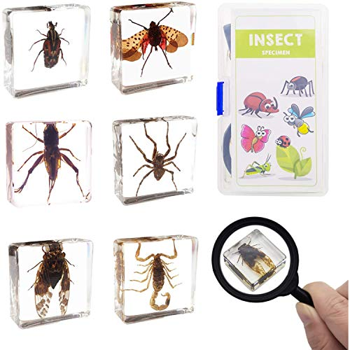 ELifeBox 6 PCS Insect Specimen Set, Spider/Scorpion/Cricket/Flower Chafers/Cicada/Spotted Lanternfly Resin Collection Science Toys