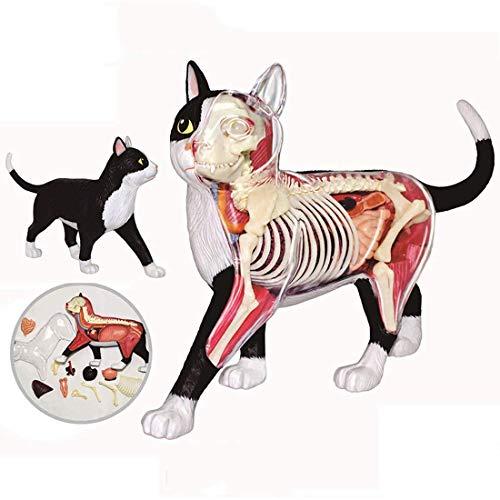 Laqemhu Modelo de Gato de anatomía médica - Esqueleto de Gato Blanco y Negro Modelo anatómico órganos Desmontables Partes del Cuerpo Rompecabezas de Juguete de Montaje