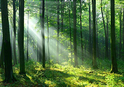 wandmotiv24 Fototapete Wald Sonnenstrahlen Nebel, XL 350 x 245 cm - 7 Teile, Fototapeten, Wandbild, Motivtapeten, Vlies-Tapeten, Grün Baum Gras M5677