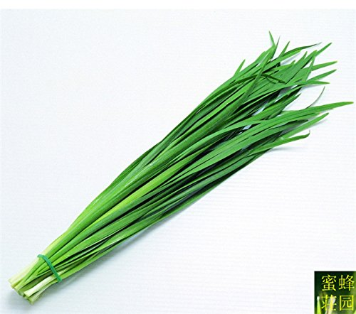 balcon plantation poireau graines taux de germination hacheur de poireau montagne de hautes graines de légumes sur 100seeds
