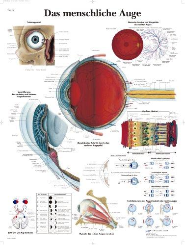 3B Scientific Lehrtafel - Das menschliche Auge