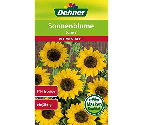 Dehner Soraya bloemenzaad, zonnebloem per 5 stuks (5 x 6 g)