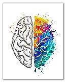 Brain Art Print - 8' x 10' - Unframed, Brain Art Watercolor, Brain Painting, Brain Medical Poster, Brain Wall Art Décor, Science Art, Brain Watercolor Print, Medical Art