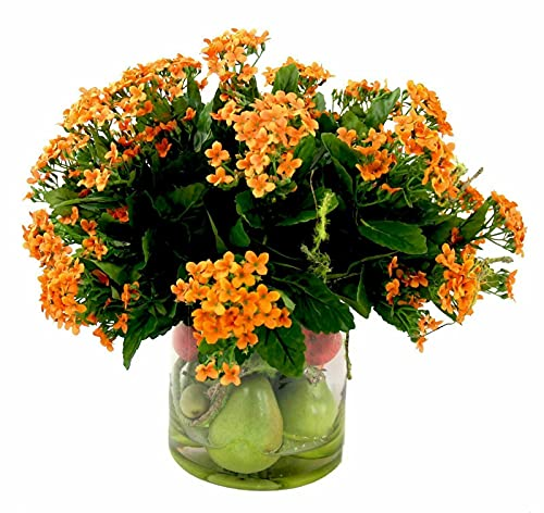 Kalanchoe Orange Kalanchoe Blossfeldiana c9 Full Mature 4in Pot