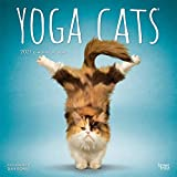 Yoga Cats OFFICIAL 2021 12 x 12 Inch Monthly Square Wall Calendar, Animals Humor Cat