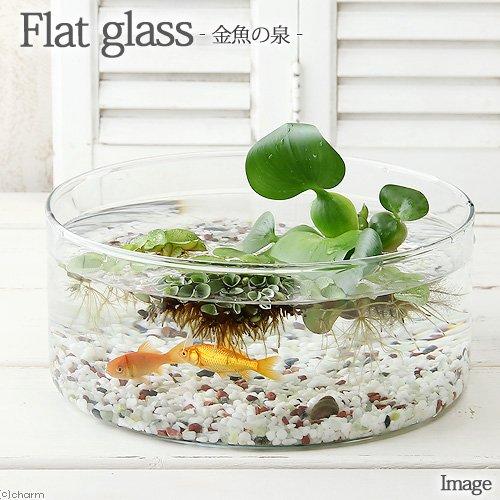 charm(チャーム) (金魚)私のアクアリウム ~ 金魚の泉 ~ フラットグラス(直径25×H9cm)小赤2匹 【生体】