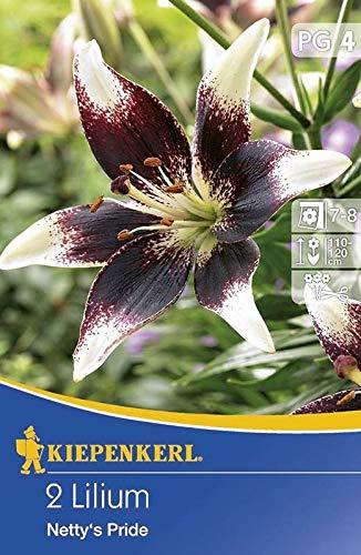 Kiepenkerl Blumenzwiebel Zweifarbige Lilien \'Nettys Pride\'