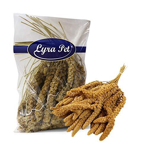 Lyra Pet® 5 kg Kolbenhirse 5000 g gelb Vogelfutter Sittich Kanarienvögel handverlesen