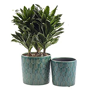 SRXing Ceramic Flower Pot Garden Planters 6.8″ and 5.6″ Set of 2 Indoor Outdoor, Modern Nordic Style Plant Containers … (Green)