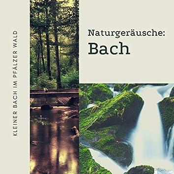 Naturgeräusche: Bach: Bachgeflüster im Frühling, Kleiner Bach im Pfälzer Wald