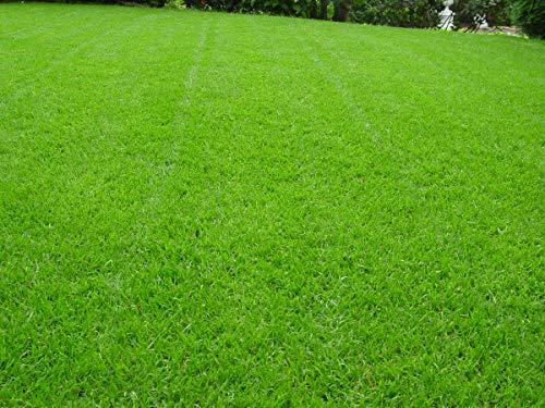Rasen Berliner Tiergarten Grassamen Rasensamen Rasensaat Gras 5kg - Qualität zum fairen Preis