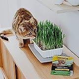 GimCat Hydro-Gras - Herbe à chats issue d'une culture en plein air contrôlée - Pousse facilement en 5 à 8jours avec seulement un arrosage - 1barquette (1 x 150g)
