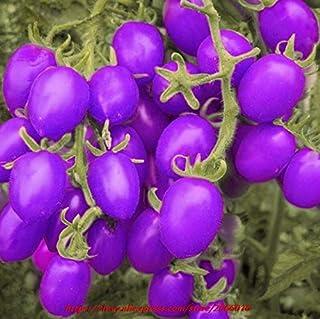 20ピースアイリスフラワーペレンニアフラワーレアフラワーアゴヒゲアイリス、ネイチャーシードランの花Diy用ガーデン:25