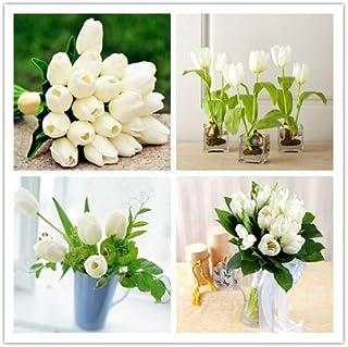 Go Garden Raras flores de tulipanes blancos Bonsai Tulip Bonsai Plantas de flor Plantas aromáticas hermosas 5 partículas Es bulbo (No Tulip Bonsai)