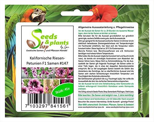 Stk - 45x Kalifornische Riesen Petunien F1 Pflanzen - Samen #147 - Seeds Plants Shop Samenbank Pfullingen Patrik Ipsa