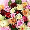 プレミアムローズ 歳の数だけバラの花束 50歳代 おまかせ50~59本 トゲ取りなし 無料ラッピング 【#元気いただきますプロジェクト】