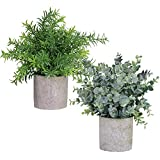 Winlyn 2 Pack Artificial Potted Plants Faux Eucalyptus & Rosemary Greenery in Pots Small Houseplants 8.3'-9' Tall for Indoor Greenery Tabletop Décor Centerpiece